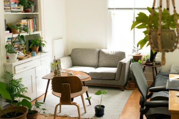 Decoração com plantas em todas as divisões da casa